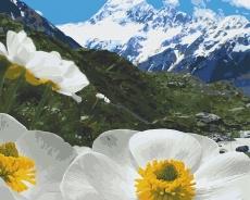 Альпийские маки